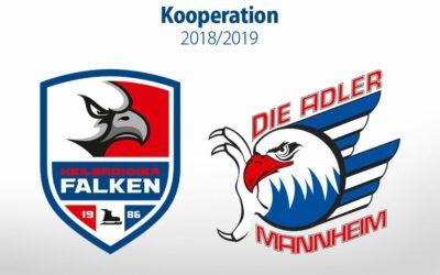 Falken kooperieren wieder mit Mannheim